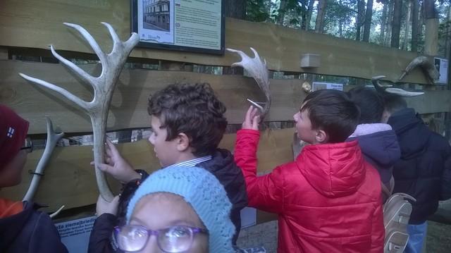 Skolēni aptausta briežu ragus, kas piestiprināti koka sienai